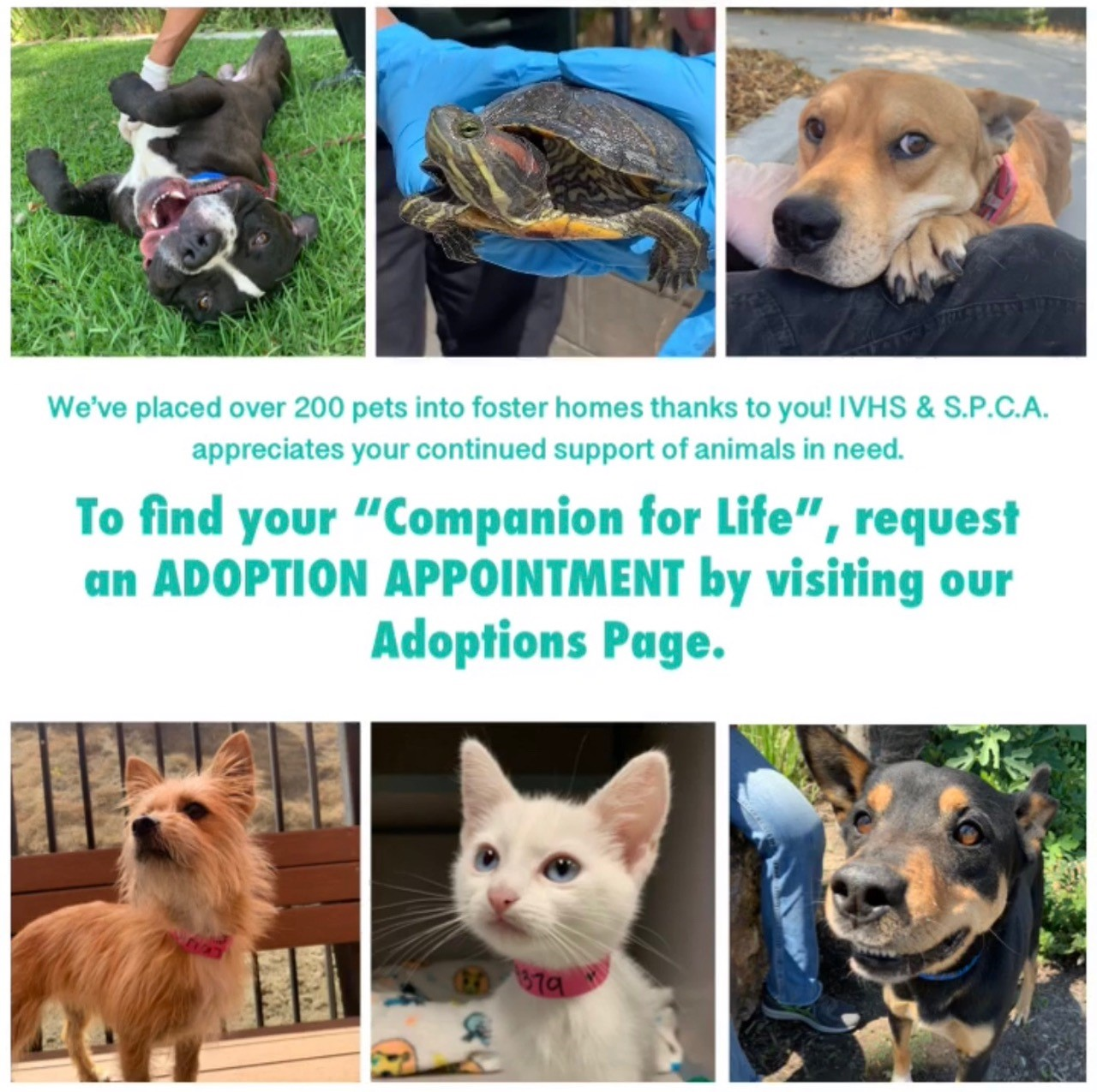 Homepage Inland Valley Humane Society And S P C A